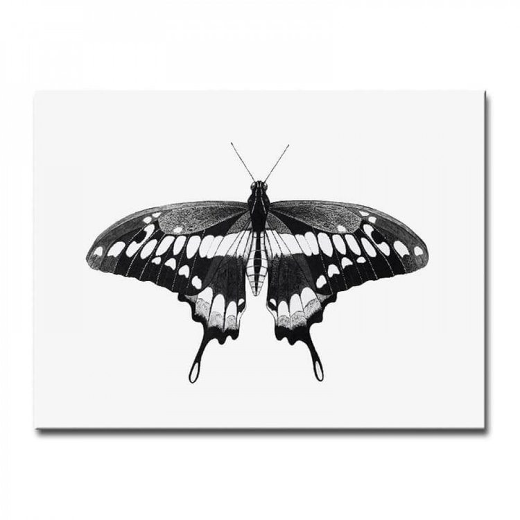 Картина Бабочка ЧБ