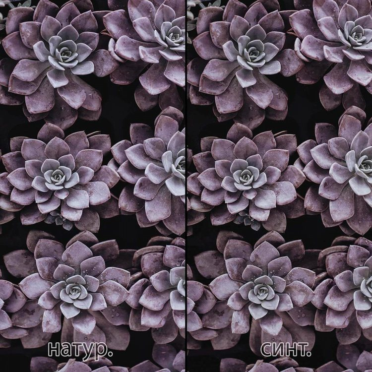 Картина Фиолетовые Суккуленты