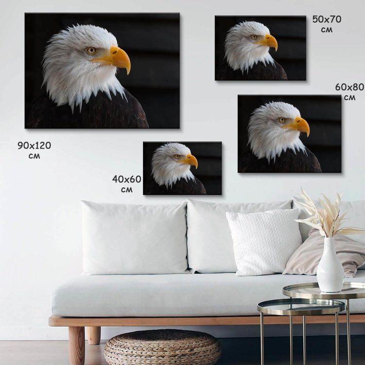 Картина Белоголовый Орлан - p53793