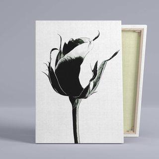 Картина Черно-Белая Роза
