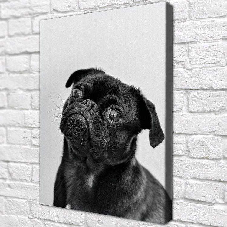 Картина Черный Мопс - p53765