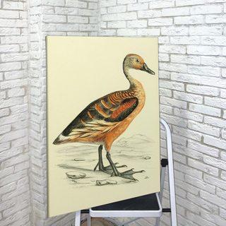 Картина Duck