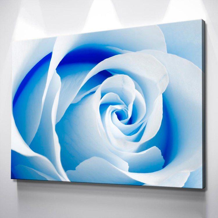 Картина Голубая Роза