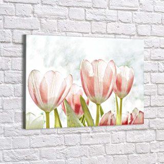 Картина Нежные Тюльпаны - p53387