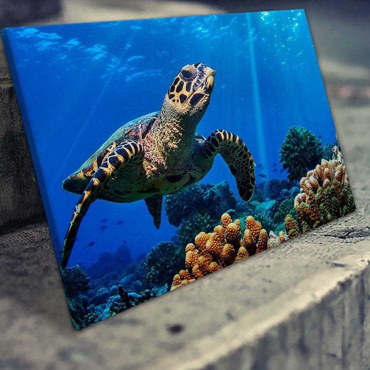 Картина Один День Из жизни Черепахи