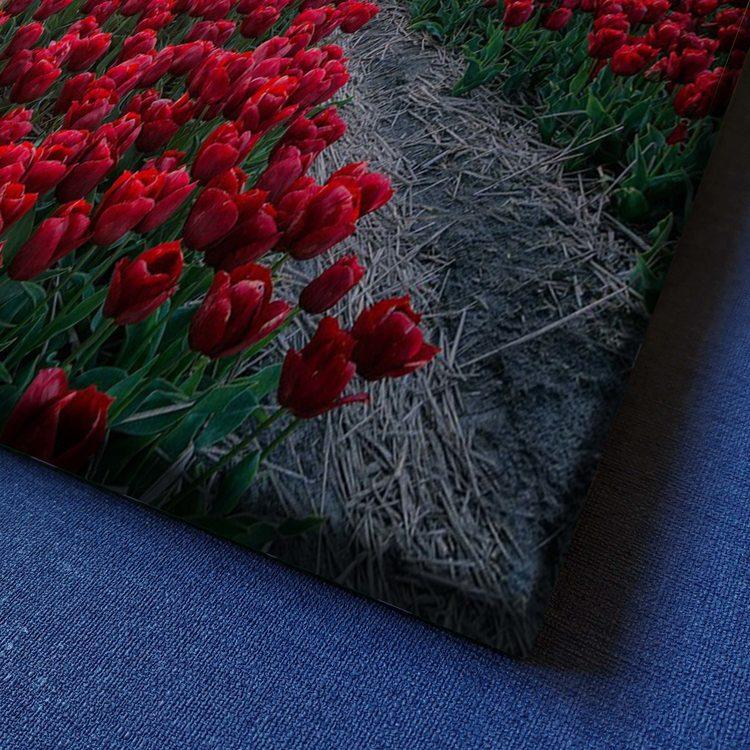 Картина Тюльпановая Дорожка