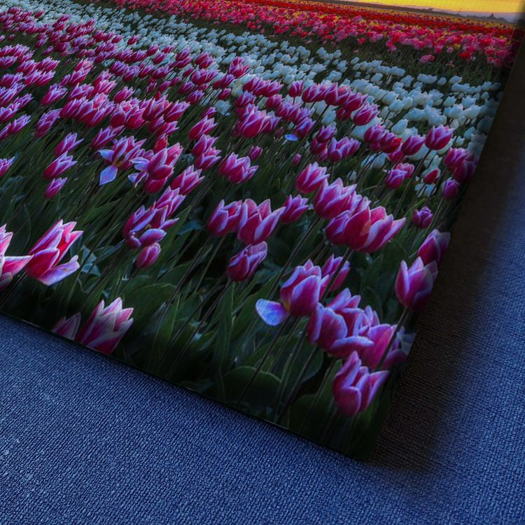 Картина Тюльпановое Поле