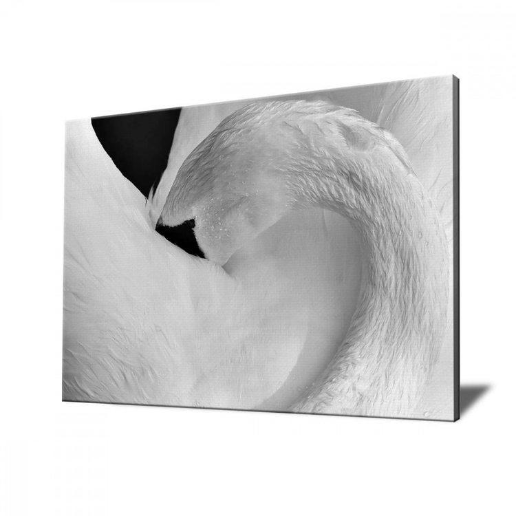 Картина Лебедь ЧБ