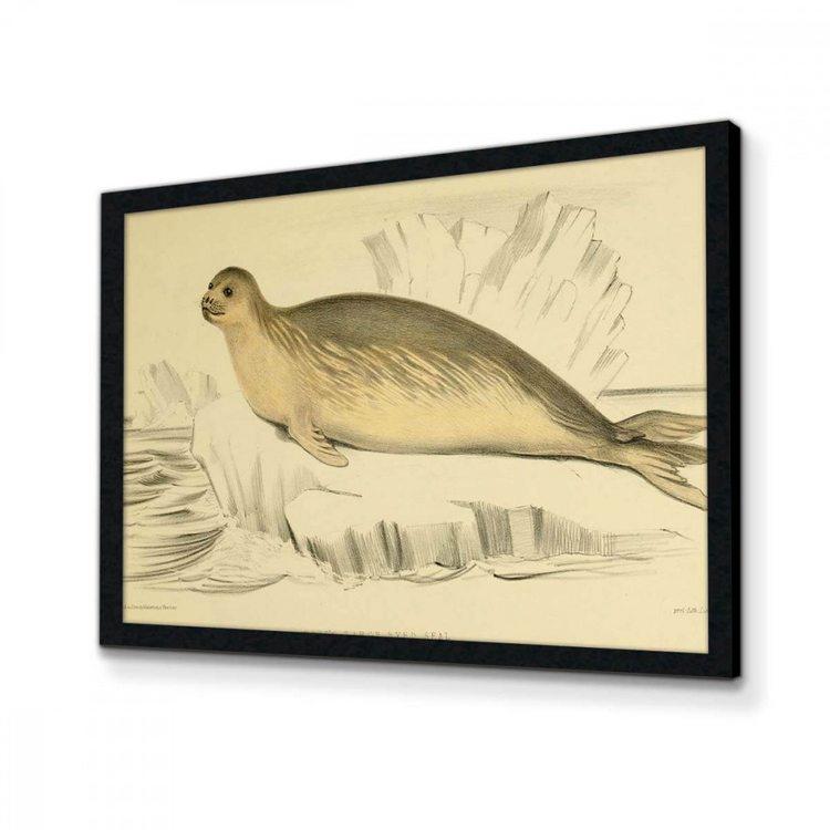 Картина Морской Котик
