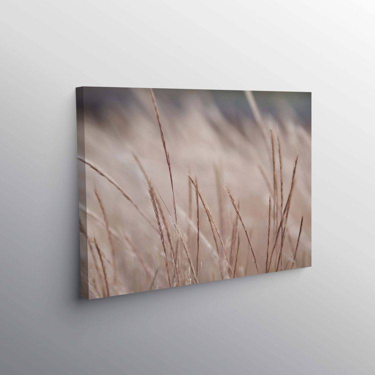 Картина Осенние Травинки